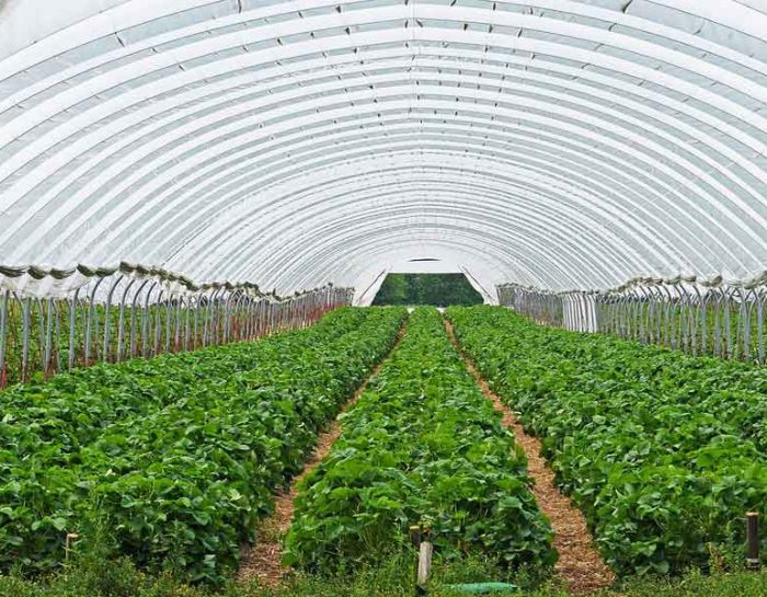 Fertilization of Greenhouse Crops