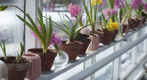 Fertilize Greenhouse Plants