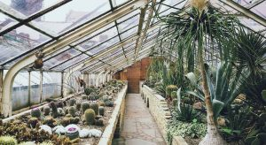 Gardening with a Greenhouse