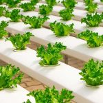 The Purposes of Hydroponics Greenhouses