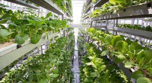 Organic Hydroponic Greenhouses