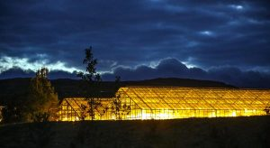 Greenhouse Lighting