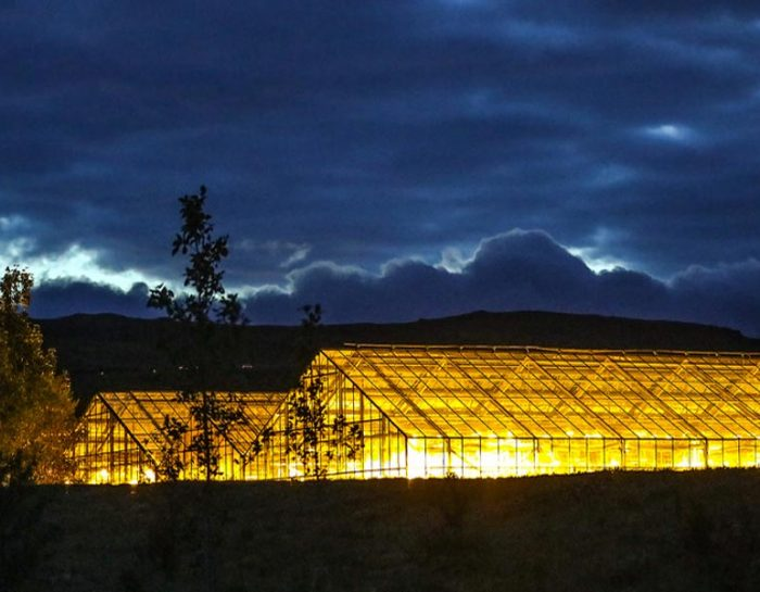 Five Factors to Consider When Choosing Greenhouse Lighting