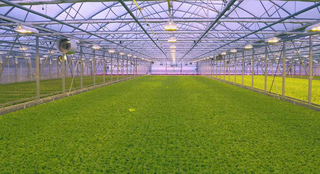Greenhouses: Where the Grass is Green All Year-Round