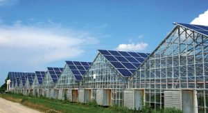 Constructing Commercial Greenhouse