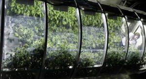 Greenhouse Design