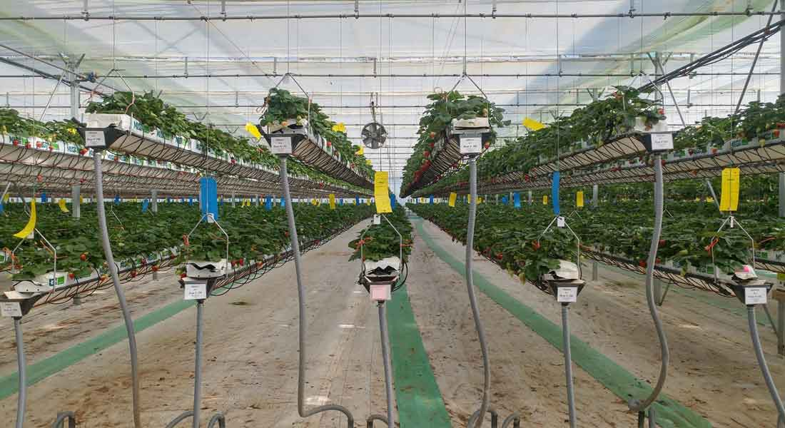 Essential Commercial Greenhouse Equipment