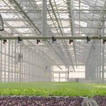 How Does Greenhouse Humidification Work