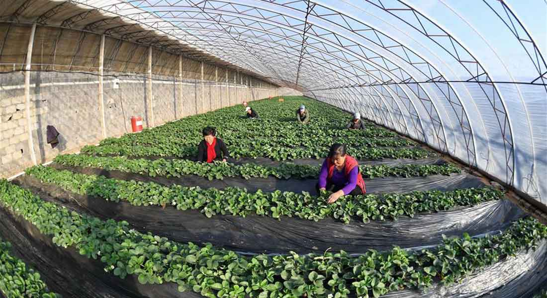 Should Farmers Do Business with Greenhouse Manufacturers?