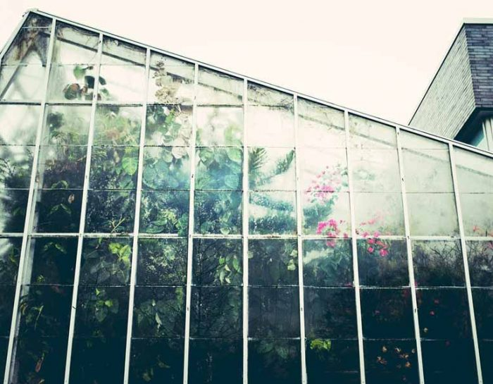 Greenhouse Kits for Plant Enthusiasts